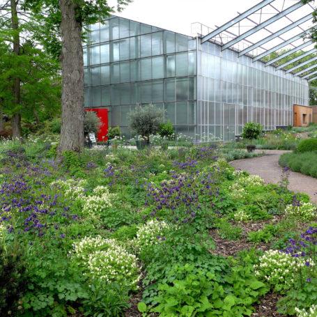 Zu sehen ist der Botanische Garten in Duisburg Hamborn. Man sieht im Hintergrund ein großes Gewächshaus mit einem roten Eingang. Im Vordergrund sind viele verschiedene Blumen und Pflanzen in weiß und violett. Auch ein paar Bäume sind im Bild.