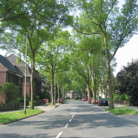 Auf diesem Bild sieht man eine Straße. Rechts und links sind Häuser gebaut und Bäume gepflanzt. Weiter im Hintergrund sieht man geparkte Autos.