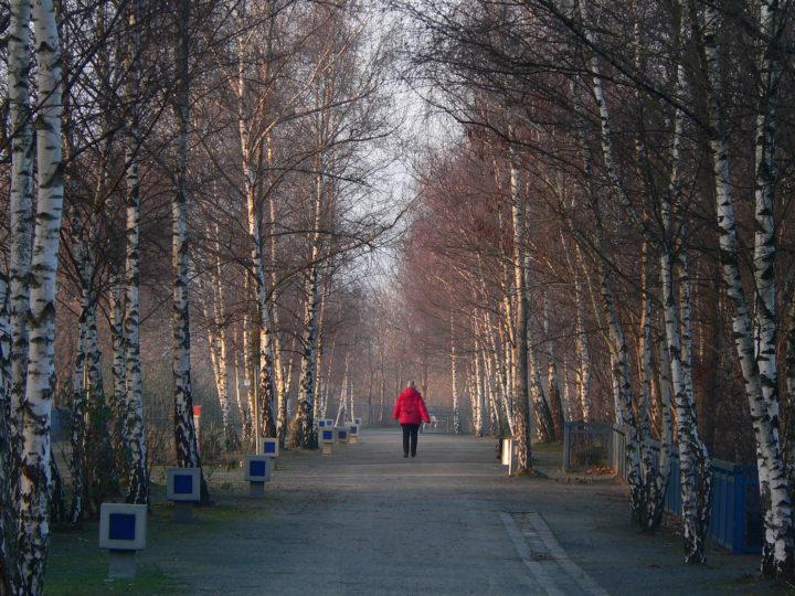 Man sieht einen Waldweg der aus Schotter besteht. Auf dem Weg läuft eine Person mit einer schwarzen Hose und einer Roten Jacke. Links an dem Weg stehen kleine Pfeiler mit Blauen Kästen darin. Die Sonne scheint niedrig zu stehen weshalb es ein Bild aus dem Herbst/Winter sein kann.