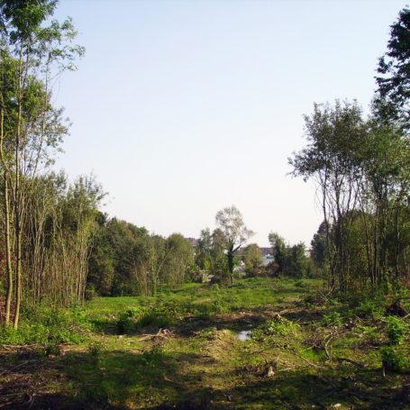 Auf diesem Bild sieht man eine Art Biotop. Zu sehen sind die Folgen von Sturm Ela 2014. Es liegen Bäume auf dem Boden. Im Hintergrund sind Wohnhäuser zu sehen.